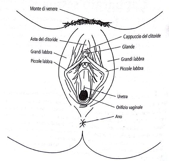 Grande clitoride o piccolo penerasata nero micio scopata